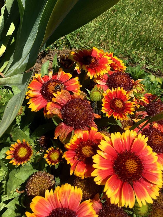 Bloemen en bij royalty-vrije stock foto's