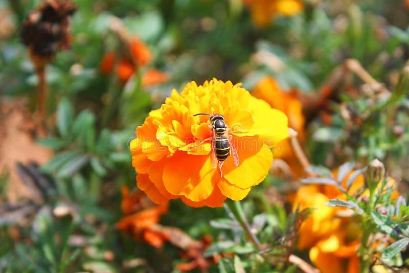 Bloemen en bijen Het plukken, honing royalty-vrije stock foto