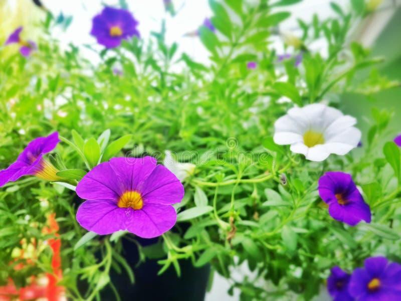 Bloemen en blad royalty-vrije stock foto