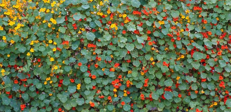 Bloemen en Bladeren royalty-vrije stock foto's