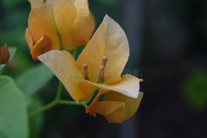 Bloemen en bladeren in de zomer stock foto's