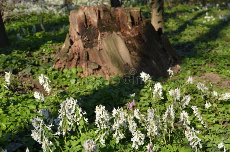 Bloemen en boomstomp royalty-vrije stock afbeeldingen