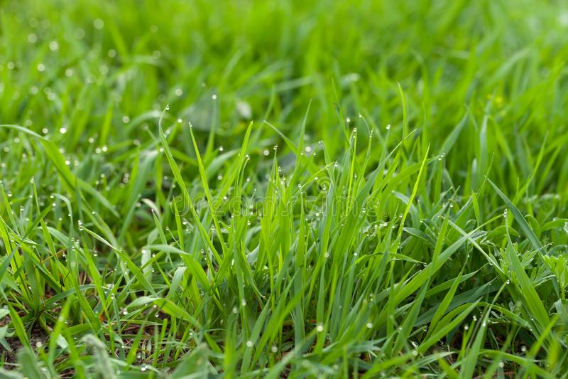Bloemen en dauw op het gras De lente in de Tuin Selectienadruk Ondiepe Diepte van Gebied royalty-vrije stock fotografie