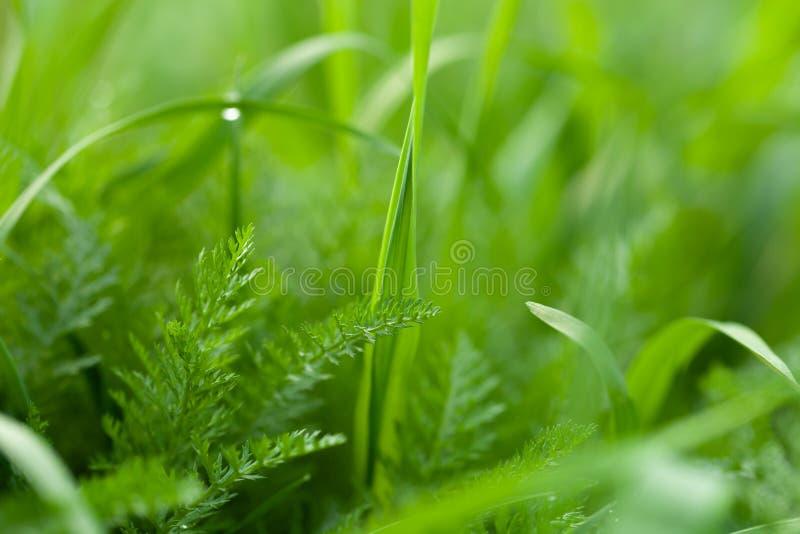 Bloemen en dauw op het gras De lente in de Tuin Selectienadruk Ondiepe Diepte van Gebied royalty-vrije stock foto's