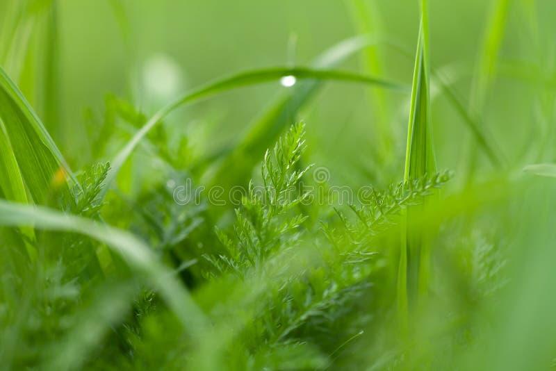 Bloemen en dauw op het gras De lente in de Tuin Selectienadruk Ondiepe Diepte van Gebied royalty-vrije stock afbeeldingen