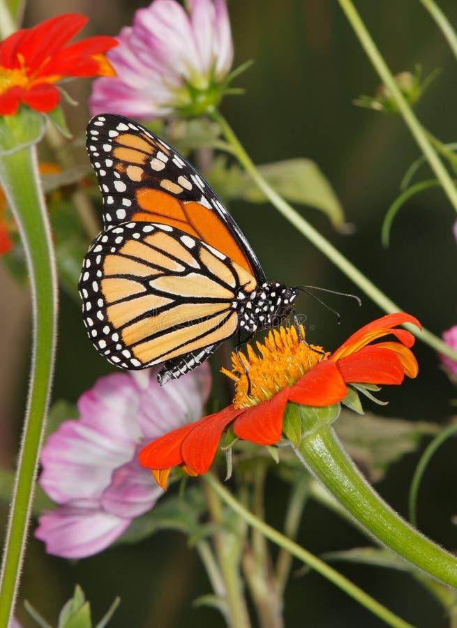 Bloemen en de Vlinder van de Monarch royalty-vrije stock foto