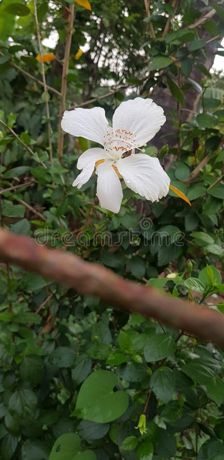 Bloemen en doornen stock foto