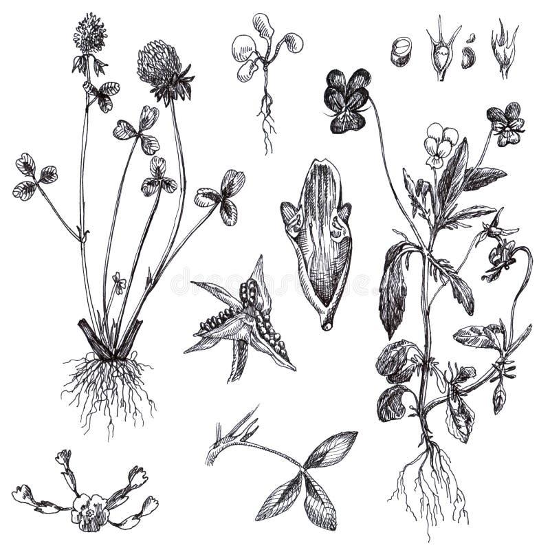 Bloemen en geneeskrachtige kruiden stock illustratie