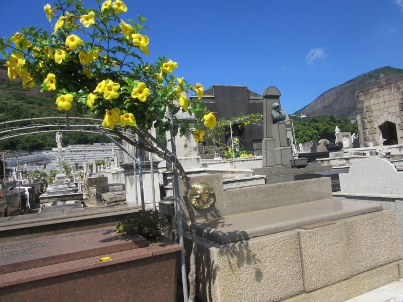 Bloemen en graven stock fotografie