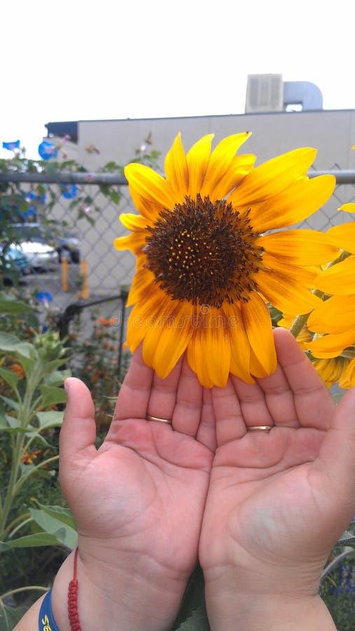 Bloemen en handen stock afbeelding