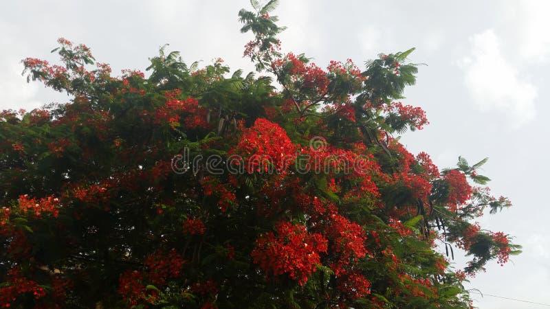 Bloemen en hemel royalty-vrije stock foto's