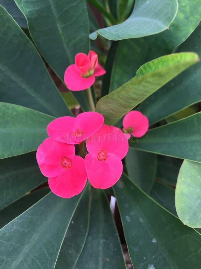 Bloemen en installaties stock afbeelding