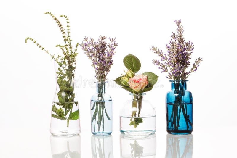 Bloemen en kruiden in glasflessen Abstracte die bloemboeketten in flessen op wit worden geïsoleerd stock afbeelding