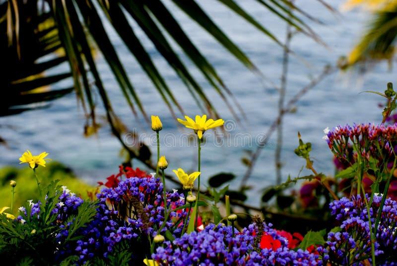 Bloemen en overzees royalty-vrije stock fotografie