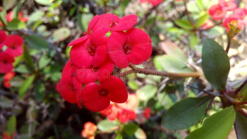Bloemen en sommige Bijen stock afbeeldingen