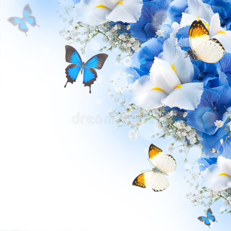 Bloemen en vlinder, blauwe hydrangea hortensia's royalty-vrije stock afbeeldingen