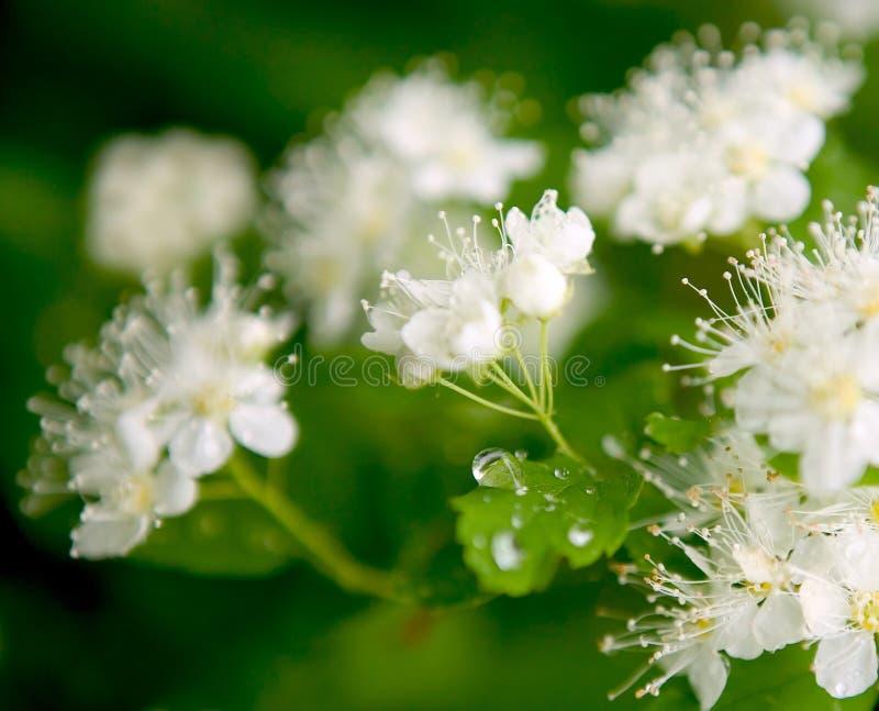 Bloemen en waterdaling royalty-vrije stock foto's