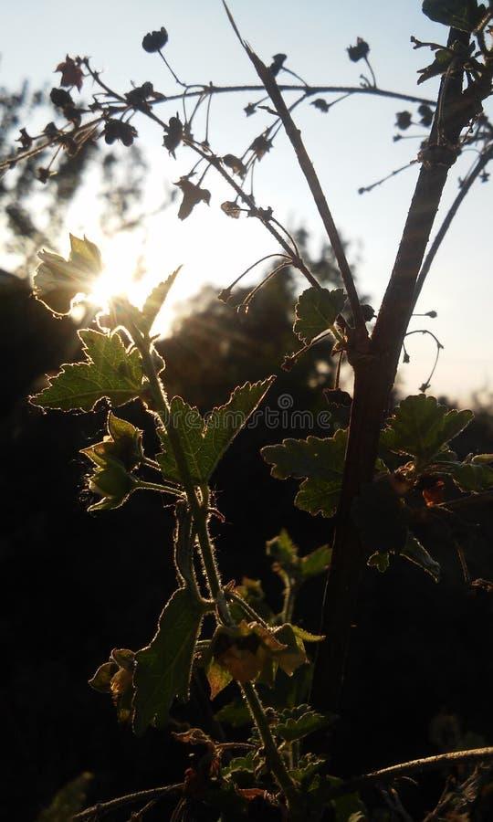 Bloemen en Zon stock afbeeldingen