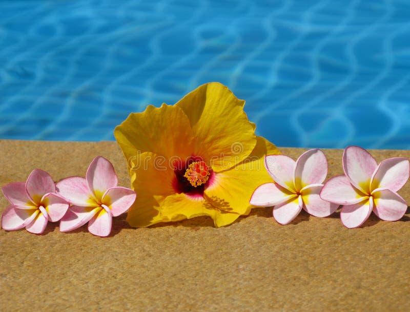 Bloemen en zwembad royalty-vrije stock foto's