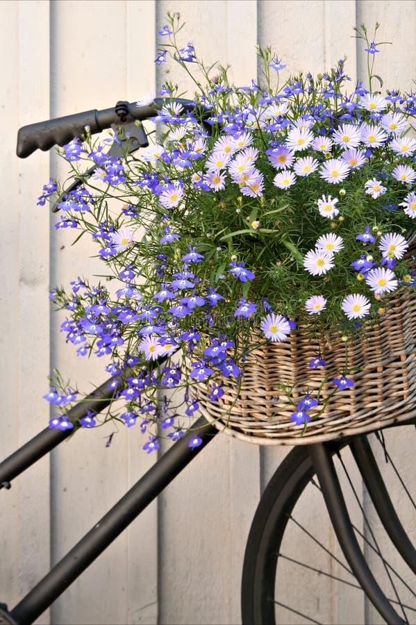 Bloemen fiets royalty-vrije stock foto's