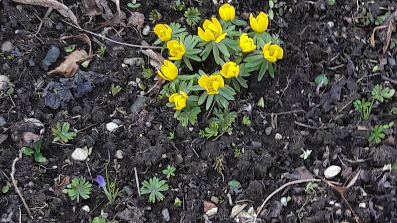 bloemen in geel stock fotografie