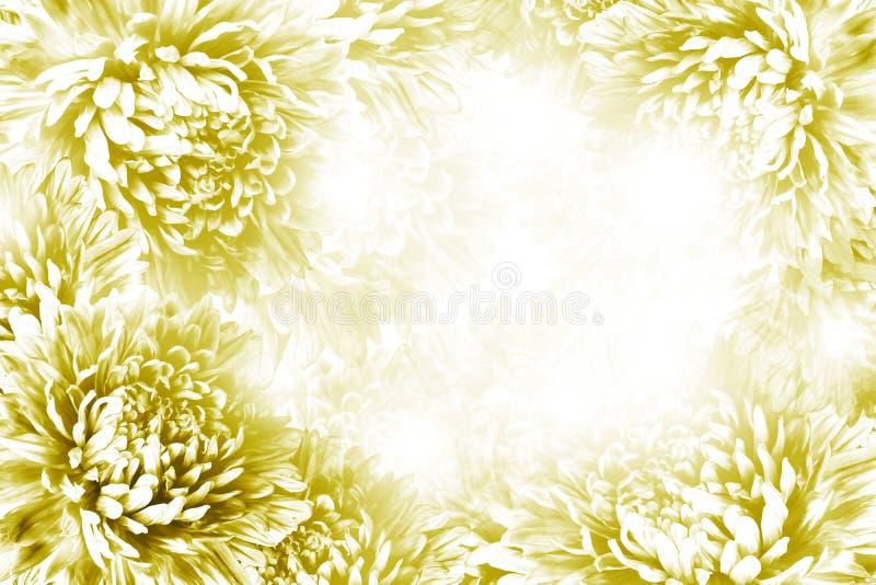 Bloemen geel-witte mooie achtergrond De samenstelling van de bloem Kader van geel-witte bloemen Asters op witte achtergrond stock afbeeldingen
