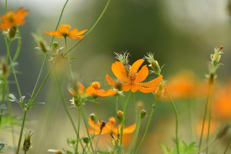 Bloemen geeloranje Mooie bloei in aard royalty-vrije stock fotografie