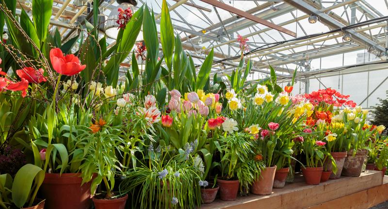 Bloemen in groen huis Bloemenboeketwinkel Bloeiende installaties en multikleurenbloemen binnen een tuincentrum stock afbeelding