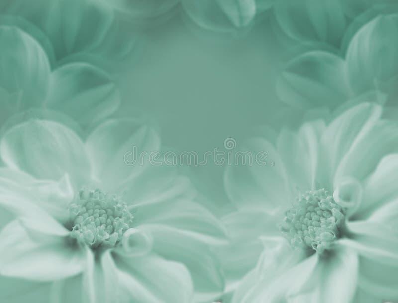 Bloemen groen-witte mooie achtergrond Grote bloemen van dahlia op een witte vage achtergrond close-up royalty-vrije stock fotografie