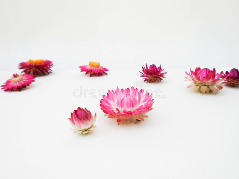 Bloemen helder perspectief De samenstelling van de bloem De herfst royalty-vrije stock foto's