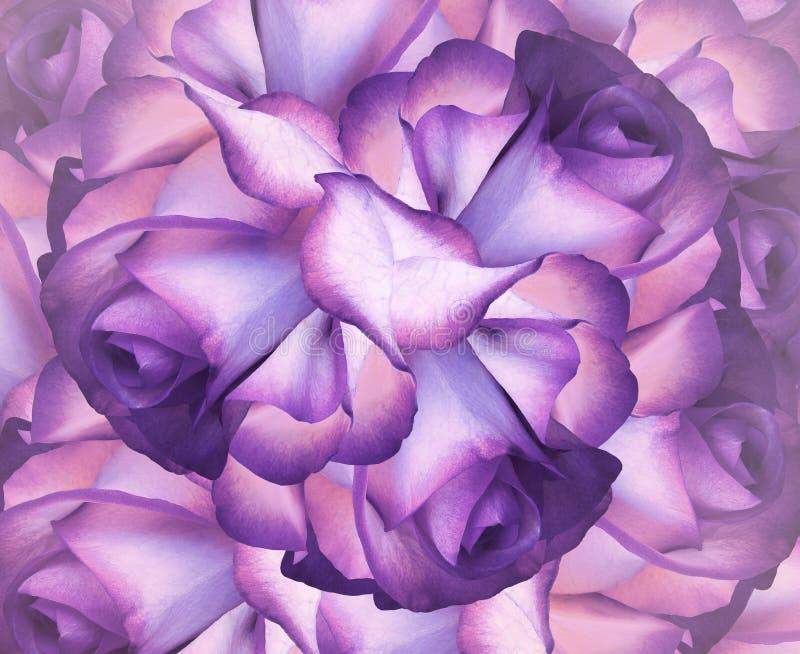 Bloemen heldere achtergrond Purper-roze-blauwe bloemenachtergrond van rozen stock foto