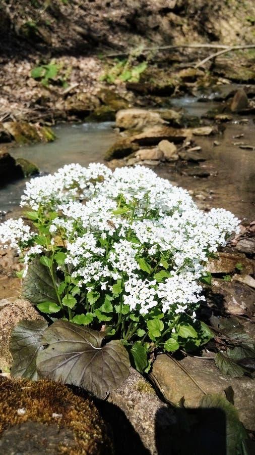 Bloemen in het bed van de berg van de bergrivier van de Noord-Kaukasus stock foto