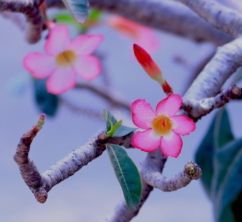 Bloemen het bloeien royalty-vrije stock foto's