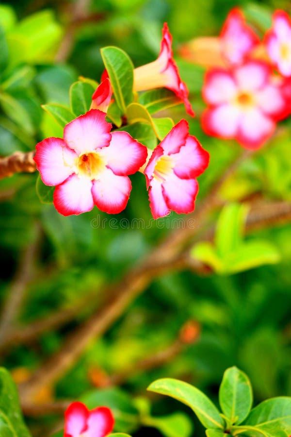Bloemen het bloeien royalty-vrije stock foto
