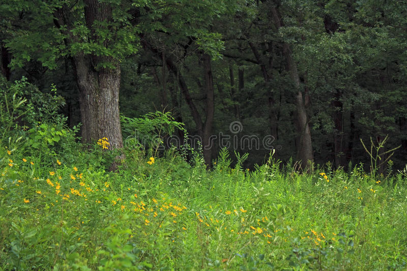 Bloemen in het bos royalty-vrije stock foto's