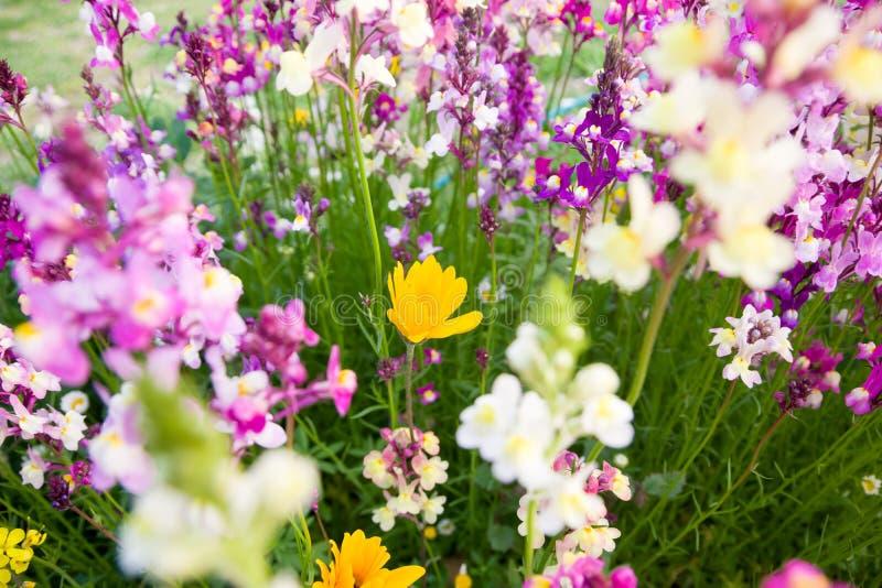 Bloemen in het centrum van de minatohaven van Chiba stock afbeeldingen