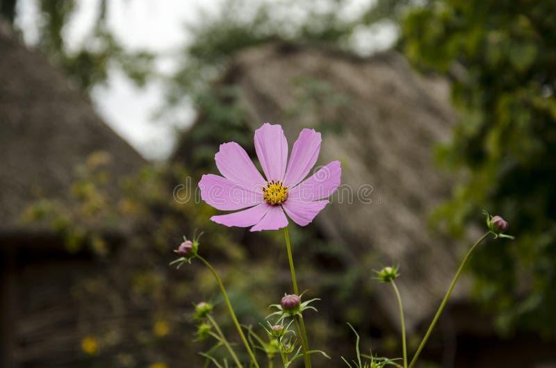 Bloemen in het dorp royalty-vrije stock fotografie