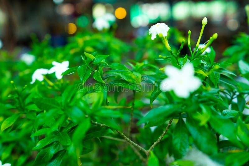 Bloemen het is gekregen witte kleur royalty-vrije stock afbeelding