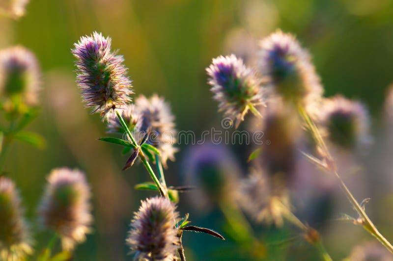 Bloemen in het gras stock foto's