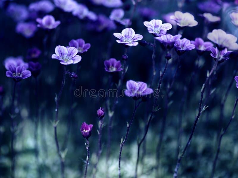 Bloemen in het maanlicht royalty-vrije stock afbeeldingen