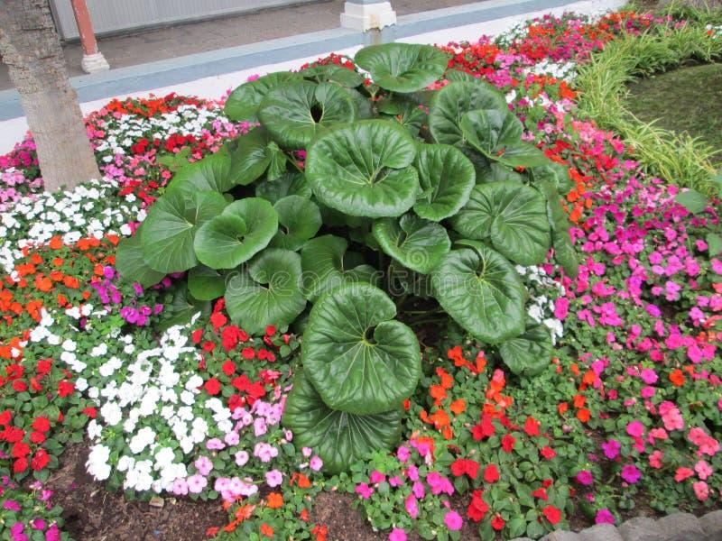 Bloemen in het park royalty-vrije stock afbeelding