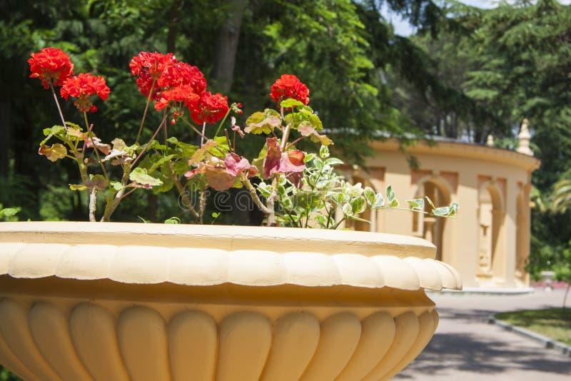 Bloemen het rode tuinieren royalty-vrije stock afbeelding