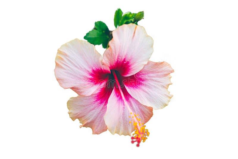 Bloemen het is roze bij mooi op park en is onduidelijk beeld royalty-vrije stock fotografie