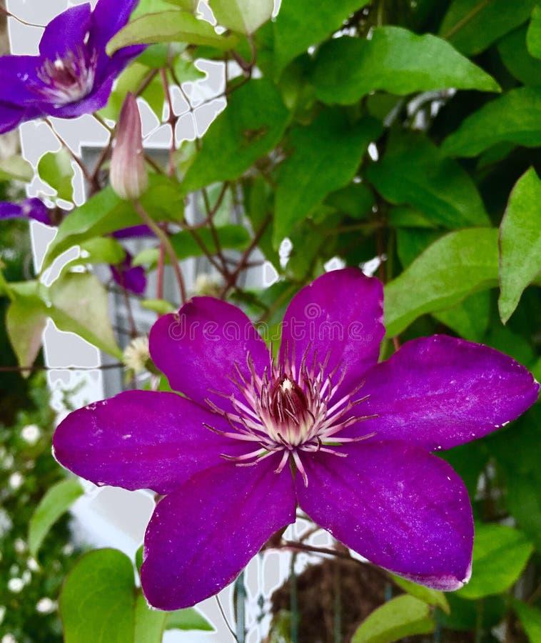 Bloemen in het venster stock afbeelding
