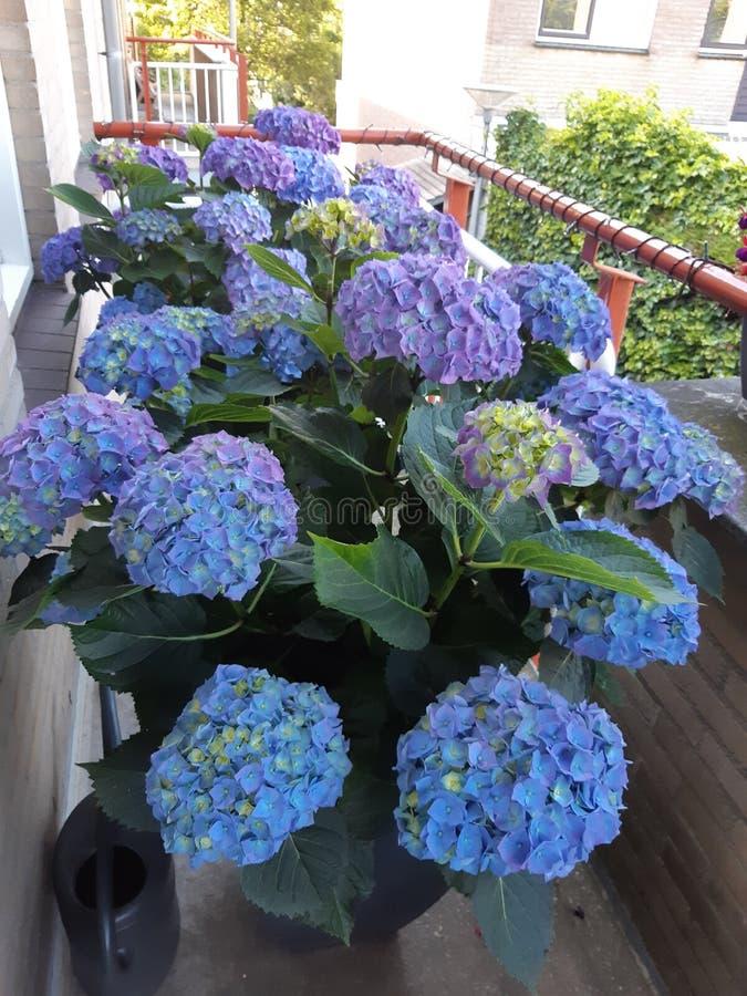 Bloemen in het zon purpere blauw stock afbeeldingen
