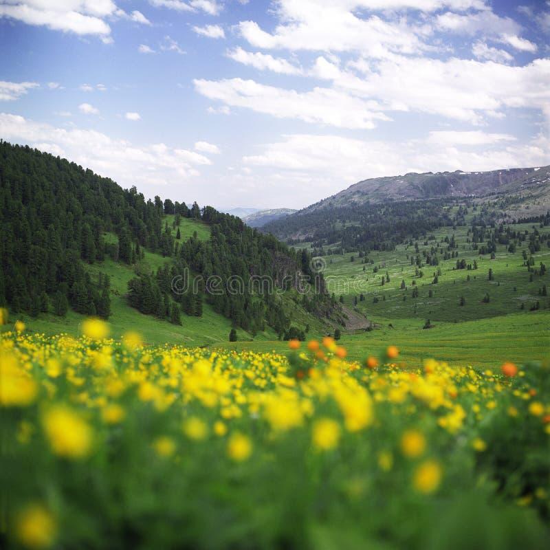 Bloemen in hooggebergte stock foto