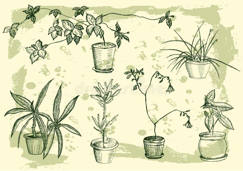 Bloemen, houseplant, zoet huis vector illustratie