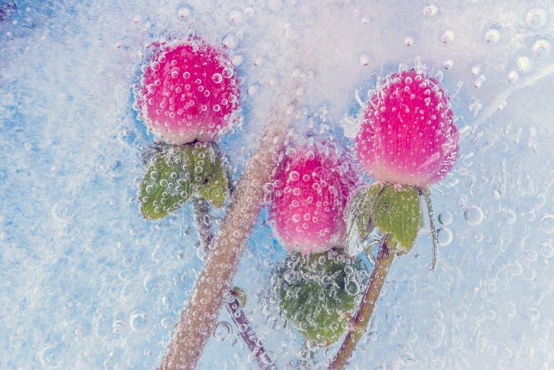 Bloemen in ijs royalty-vrije stock foto's