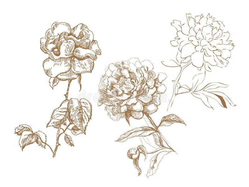 Bloemen inzameling vector illustratie