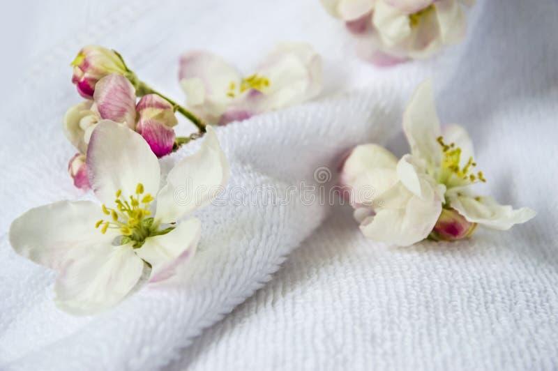 Bloemen, knoppen van een appelboom tegen de achtergrond van een witte badstofhanddoek Gevoelige bloemen op een lichte achtergrond stock foto